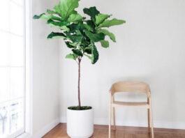 photo d'une plante artificielle